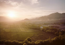 Fields of organic farming during sunset aerial view Royalty Free Stock Images