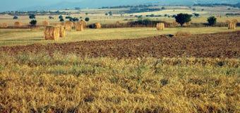 fields panorama Arkivfoton