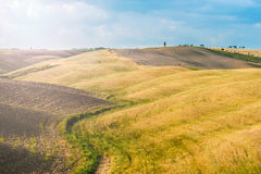 Fields and peace in the warm sun of Tuscany, Italy Royalty Free Stock Photos