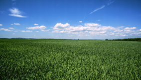 Fields. Photo season from Slovakia, agricultural landscape. Fields. Crops Royalty Free Stock Photography