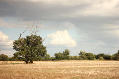 Fields Royalty Free Stock Images