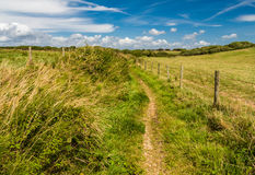 Between 2 fields. Photo was taken in area of Milford on sea, UK royalty free stock image