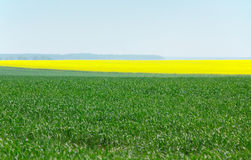 Fields planted with cereals and oilseed rape Stock Photo