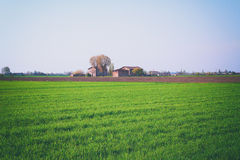 Fields planted with farmer's house Stock Image