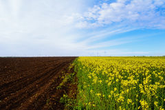 Fields. Plowed Field Next To The  Field Of Colza. Real Collage Created By Nature And Man Stock Image