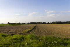 Fields in Poland between villages during sunset Royalty Free Stock Photos