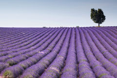 Fields of Provence Stock Photos