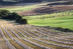Fields from Queens view in Scotland. Stock Photography