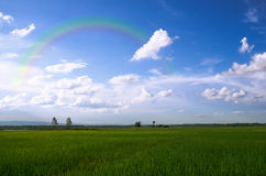 Fields and rainbow Stock Image