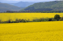 Fields of Rape and Green Hills in Bulgaria Stock Photo