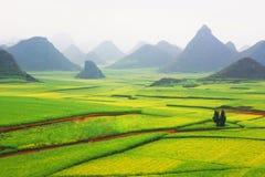 fields rapeseed Стоковая Фотография RF