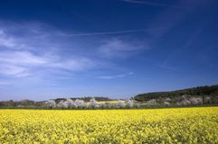 fields rapeseedfjädern Arkivfoton