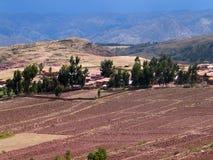 fields red arkivfoto