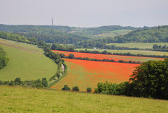 Fields of Red Poppies in the Chiltern Hills Royalty Free Stock Images