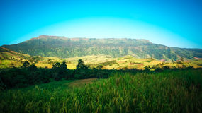 Fields Rice and mountain views Royalty Free Stock Photos