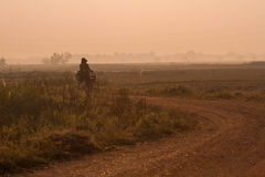 Fields during the rice season Stock Photo