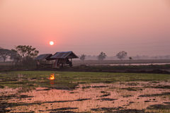 Fields during the rice season Royalty Free Stock Photo