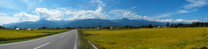fields rice vietnam Royaltyfria Foton