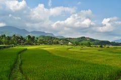 fields rice vietnam Arkivfoton