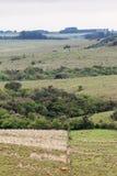 Fields  in Rio Grande do Sul Brazil Stock Photos
