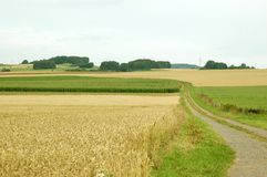 Fields and road. Stock Photography