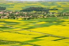 Fields & road. Blooming fields with some line & road royalty free stock photos