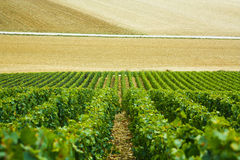 Fields and rows of grapes in the countryside, France Stock Photo