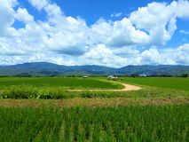 Fields in rural Thailand. royalty free stock image