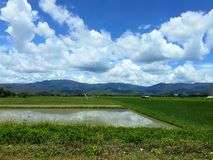 Fields in rural Thailand. View of green field in rainy season. stock photography
