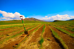 Fields with rusty spades Royalty Free Stock Images