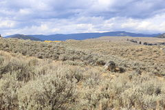 Fields of Sagebrush. Rolling hills covered with sagebrush Stock Photo