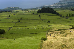 Fields of sao miguel, azores. Azores farms and fields, portugal Stock Photos