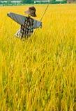fields scarecrowen Royaltyfria Foton