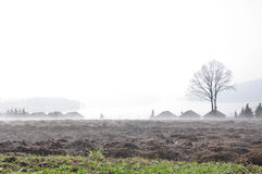 Fields in a sceninc foggy morning by the lake Stock Image