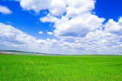 The fields and sky. The spring fields and blue sky Royalty Free Stock Photos