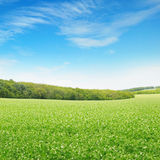 Fields and sky. Beautiful flowering fields and sky Royalty Free Stock Image