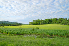 Fields and sky with slow brook Stock Photography