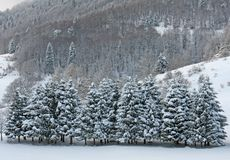 Fields of snow and snow covered trees on the Dolomites in winter Stock Photo