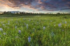 fields solnedgång Fotografering för Bildbyråer