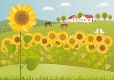 fields solrosen Fotografering för Bildbyråer