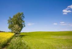fields sommar Arkivbild
