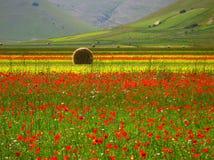 fields sommar arkivfoto