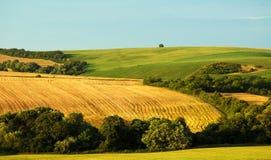 fields sommar royaltyfria bilder