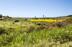 Fields in the Spanish province of Cadiz Royalty Free Stock Image