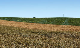 Fields in the Spanish province of Cadiz Stock Photography