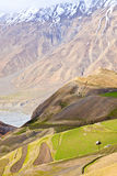 Fields in Spiti Valley Royalty Free Stock Photo