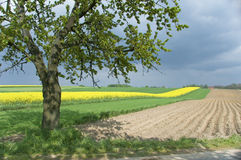 Fields In Spring Royalty Free Stock Photos
