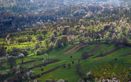 Fields in spring Royalty Free Stock Image