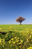 fields ståendefjädern Arkivbilder