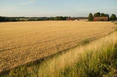 fields stockholm Стоковые Фото